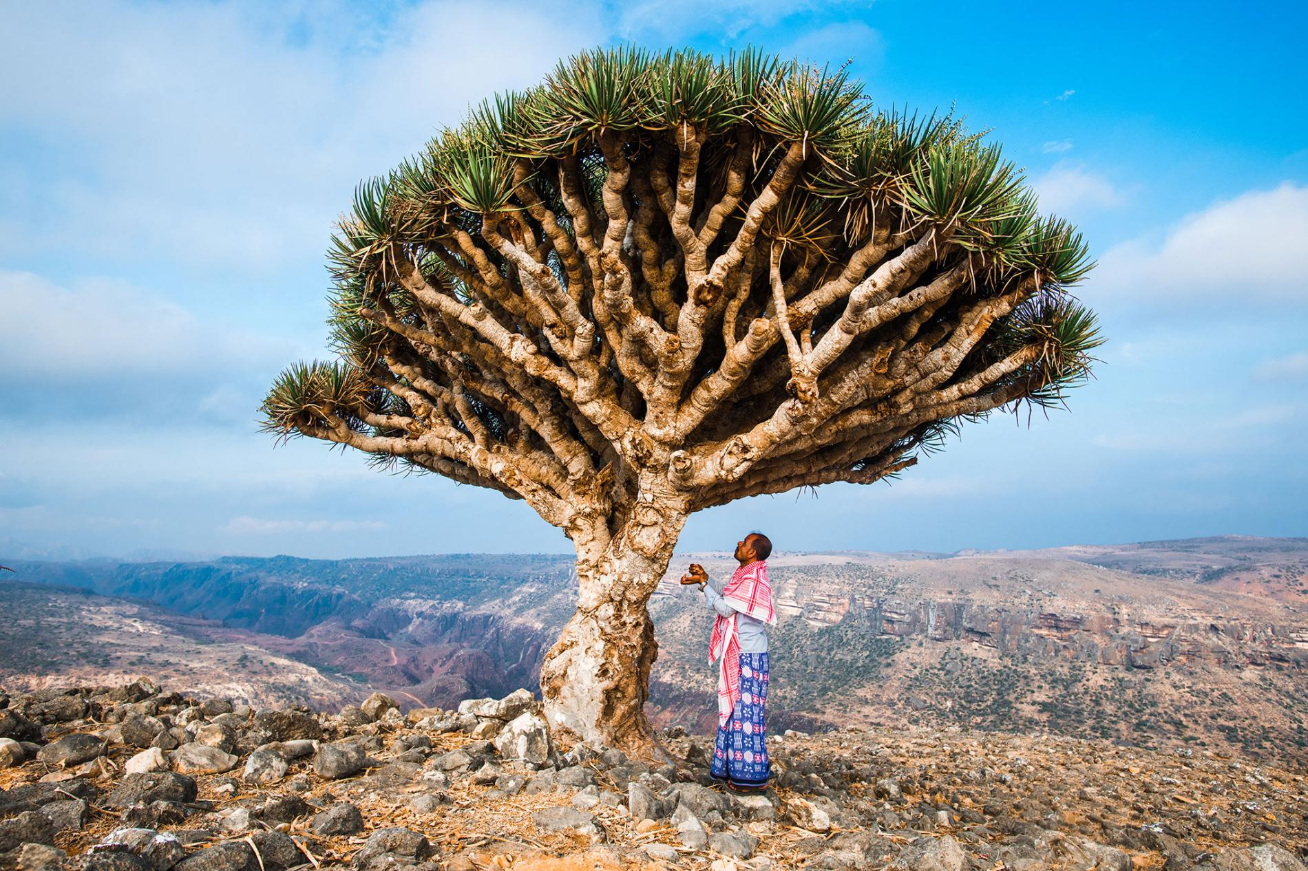 The Socotra Archipelago Project - Preserving and protecting Socotra